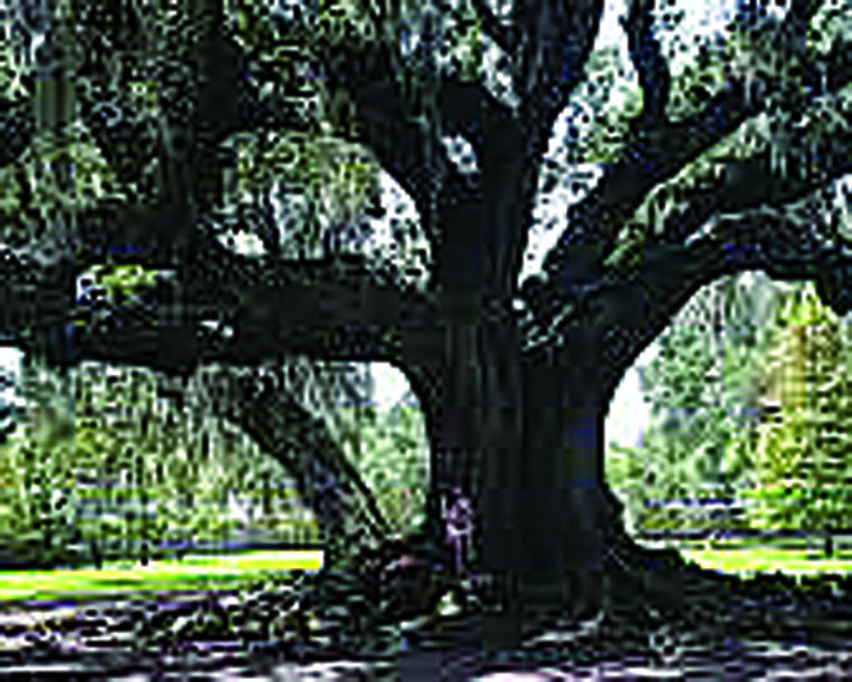 OUT ON A LIMB:  Arborist's Advice