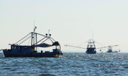 Shrimp/Crab Closures Set by MDMR