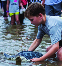 Five Turtles Returned to Gulf in the Pass Harbor