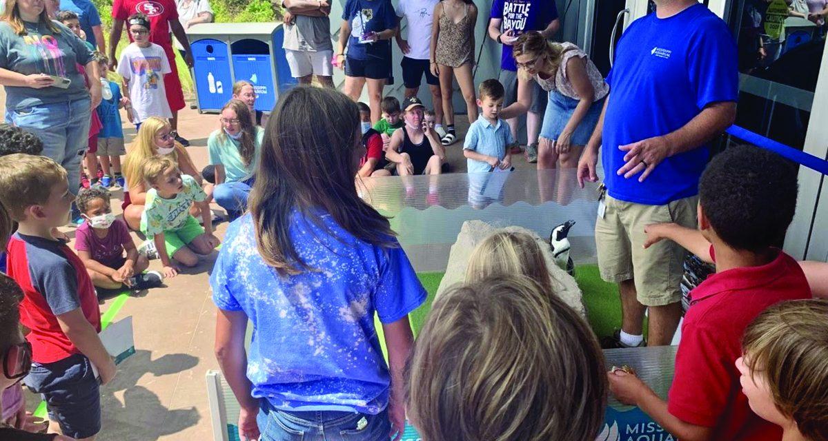 Mississippi Aquarium Offering Discount for Louisiana Residents